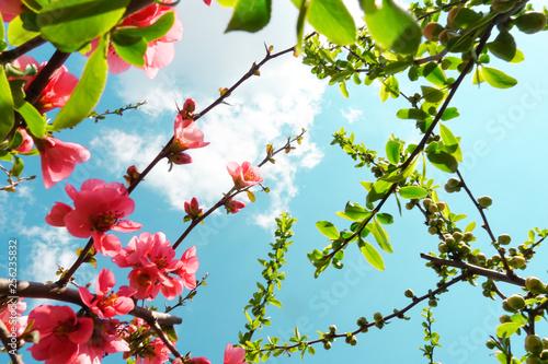 Sfondo Primavera Fiori Rami Di Mela Stock Photo And Royalty Free