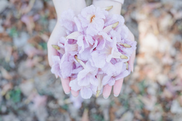 spring season with full bloom pink flower travel concept from closeup pink flower in beauty asian woman hand show for taking photo with soft focus background