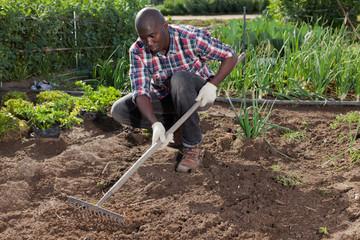 Gardener tilling soil at homestead