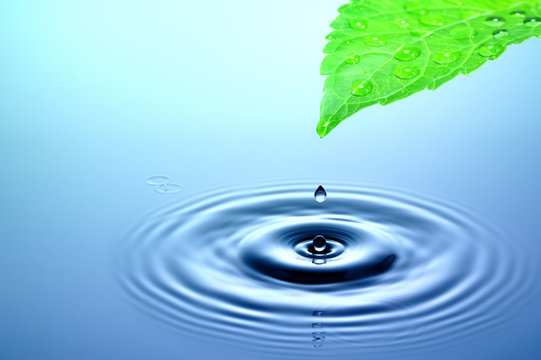 Drop of water falling from green leaf