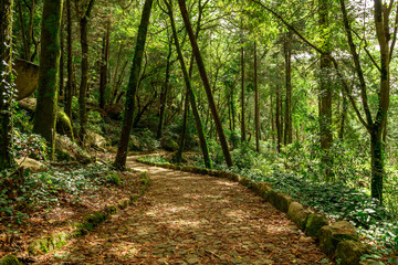 Keuken foto achterwand Weg in bos Ahead to a mystic journey. A quiet and beautiful forest path. Sintra garden near the famous Pena palace in Sintra, Portugal