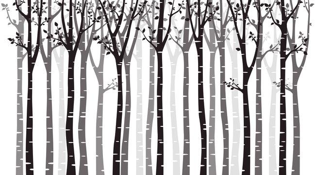 Birch tree wood silhouette on white background