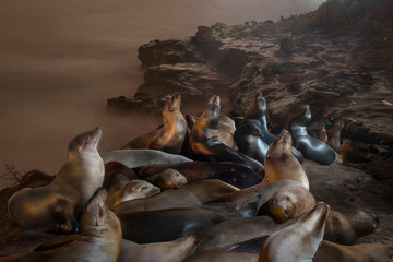 High angle view of seals relaxing on rock formation against sea