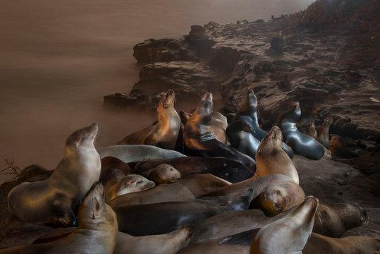 Seals relaxing on rock formation near sea