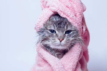Spoed Fotobehang Kat Funny wet sad gray tabby cute kitten after bath wrapped in pink towel with blue eyes. Pets concept. Just washed lovely fluffy cat with towel around his head on grey background.