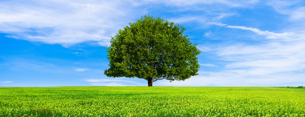Spoed Fotobehang Bomen Green summer landscape scenic view wallpaper. Beautiful wallpaper. Solitary tree on grassy hill and blue sky with clouds. Lonely tree springtime. Green planet earth. Photo stock.