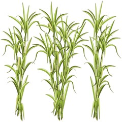 Zelfklevend Fotobehang Draw Sugar CaneSugar Cane Exotic Plant Vector Illustration isolated on White