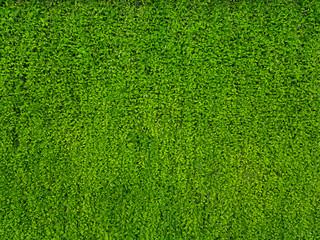 lush green leaves vertical plant garden backdrop background
