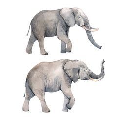 Watercolor elephant illustration