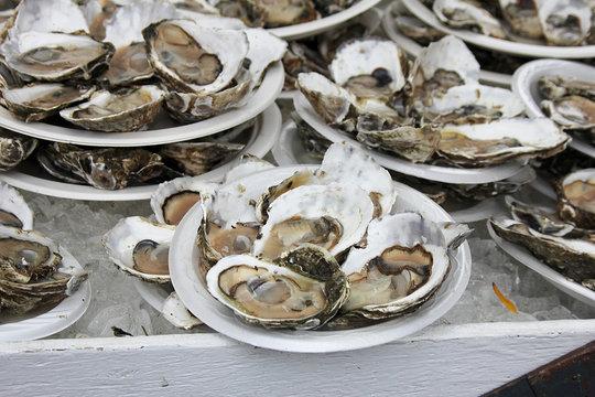 Oysters Shucked Wellfleet Festival in Boston Massachusetts