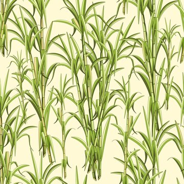 Sugar Cane Exotic Plant Seamless Pattern Vector Design
