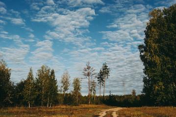 Autumn forest sunny
