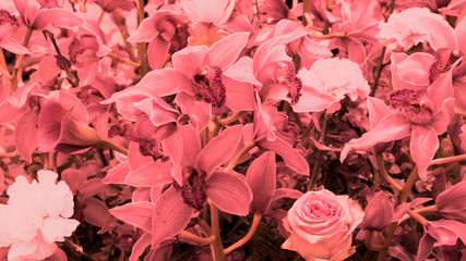 Beautiful wallpaper with plenty of orchids. coral
