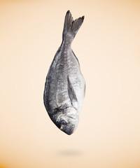 Sea bream (Sparus aurata) fish on beige background. Close-up.