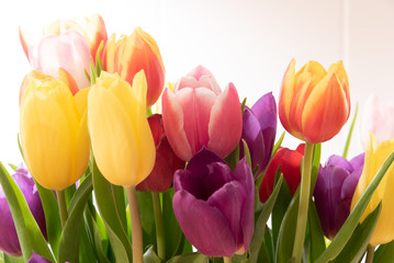 Tulips Spring Concept