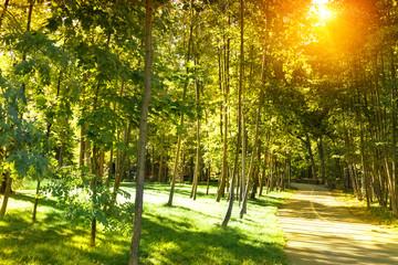 Beautiful sunshine park.
