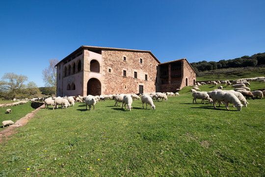 Typical catalan farm in Catalonia whith lambs