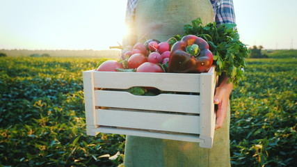 A young farmer is holding a wooden box with vegetables from his field. In the picture, only the hands are visible. Fresh and healthy products