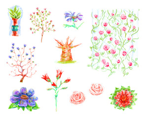Set of hand-drawn color pencils of pictures of flowers and plants, roses and trees of isolated objects on a white background.