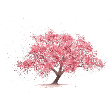 Sakura tree in bloom. Cherry blossom