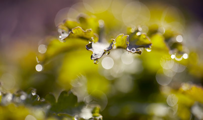 Abstract macro background with leaves with dew drops.