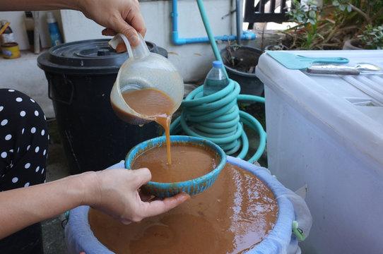 Squeezing tamarind water  ingredients for process of making indigo dye