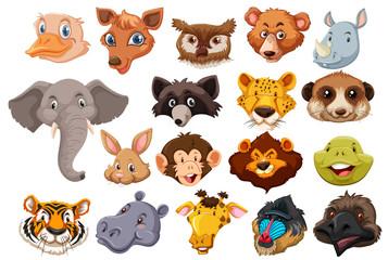 Set of wild animal head