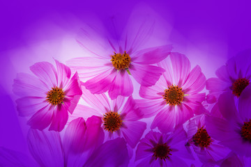 a beautiful floral background from flower petals