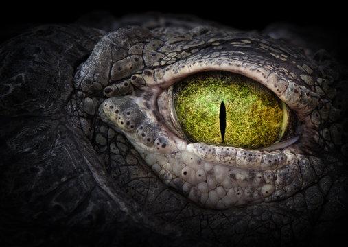 Scary eye of a crocodile. Green eye close up.