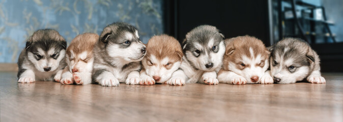 A group of puppies lie in a row on the floor Wall mural