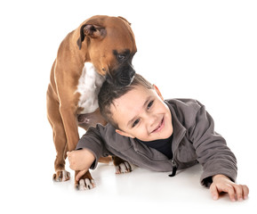 puppy boxer and boy