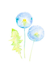 Set of dandelion leaf and flowers. Watercolor illustration isolated on white background