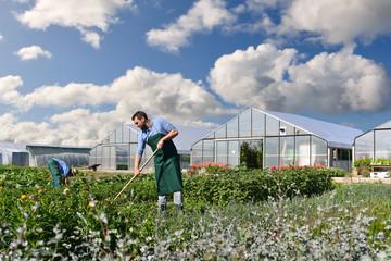Bauer auf dem Feld vor Gewächshäusern einer Gärtnerei - Anbau von Gemüse auf dem Feld // farmer in the field in front of greenhouses of a nursery - growing vegetables in the field