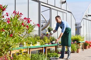 Arbeit in einer Gärtnerei - Anbau und Verkauf von Blumen und Gemüse - Gewächshaus // Work in a nursery - Cultivation and sale of flowers and vegetables - Greenhouse