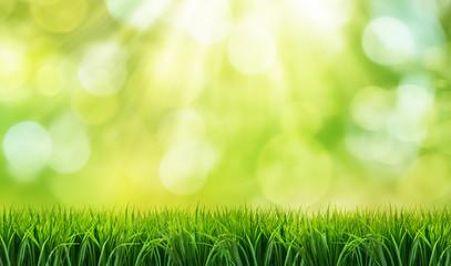 Zielona trawa, słońce i bokeh