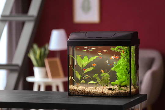 Beautiful aquarium on table in room