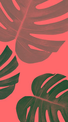 monstera color abstract background