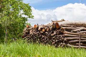 batch of fire wood in the green grass meadow