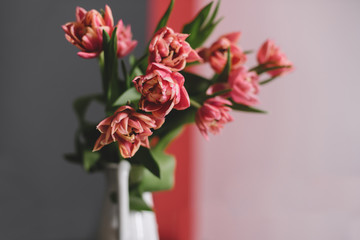 A bouquet of pink peony tulips in a white jug.