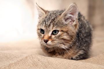 Kitty Portrait Closeup