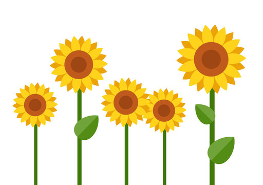 Blooming sunflowers vector flat isolated