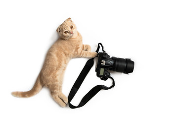 Crazy photographer. Funny cat with camera isolated on white background. Creative concept for World photography day, banner, greeting card