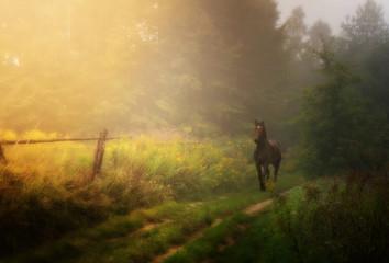 kary koń na ścieżce