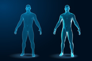 Temlate set of Human Body 3D Polygonal Wireframe Blueprint. Vector Illustration