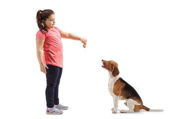 Little girl giving a biscuit to a beagle dog