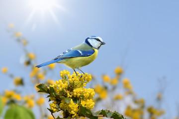 Vögel 97