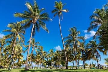 Miami, South Beach, Lummus Park