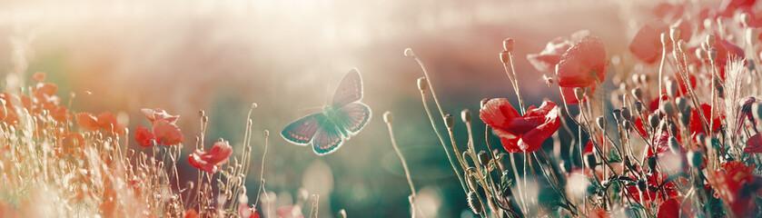 Butterfly in meadow with poppy flowers, scene lit by sunlight
