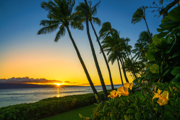 Wall Mural - Sunset in Hawaii with yellow flowers