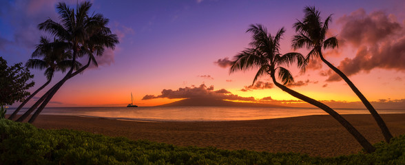 Sunset in Hawaii with palm trees